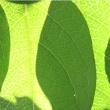 葉裏の写真