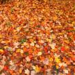 紅葉狩り、蓼科へ