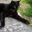 庭の黒猫たち。