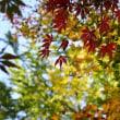 紅葉~御霊もみじ