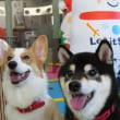 愛犬の体調の変化に気付けていますか? 犬のしつけ教室@アロハドギー