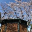 花祭り 吉祥寺ツアー