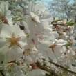卯月 ■四月■