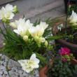 ananahi-bakingアプローチに春が来ました!