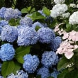 今日の誕生日の花