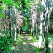 森の遊歩道(19)~完