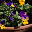 我が家の お花達