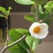 沙羅双樹の花の色