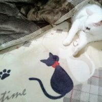 11月4日(日)のつぶやき 白猫ミルコ コタツ出したニャよ~(ФωФ)ノ #白猫 #コタツ リビング大掃除中も作業進まず(笑)