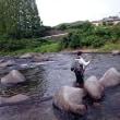 狩野川、塩焼きサイズ増える