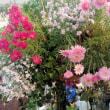 oneboke みちこ今日の庭 アイアン傘と 成田の畑