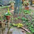 庭作業、ようやく一段落