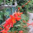 夏バージョンの花