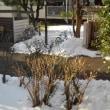 雪が降った日より、寒い
