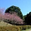 神奈川県四季の森公園
