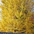 23日の散歩 ( 千本釈迦堂、立本寺、平野神社からの秋だより? )