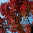 グリーンピア春日井の紅葉