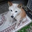 10月18日(水) 若返ったウチの犬、衝動買いした腕時計、追記ジャミロクワイ
