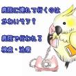 獣医師・羽多野優芳先生と 動物行動コンサルタント・石綿美香氏による 愛鳥家さん向けセミナー