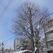 大雪も一休み