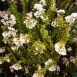 少~し珍しい花達