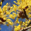 ヨーグルトの花