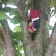 木登りくゆっぺ☆