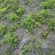 耕福米耕作人は、4月人事異動後初めて古巣に行きました。