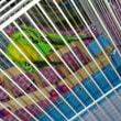 鳥柄のレスポとココア