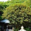 『金木犀』 高来神社