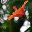 オールドニッコールで撮る初秋の水生植物公園みずの森 5
