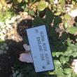 ブシャート ガーデン ビクトリア