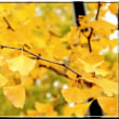 八王子甲州街道の黄葉