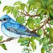 途中経過5 (エゴノキと青い鳥)
