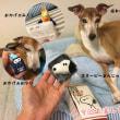 旅犬 in鳥羽リターンズ!③