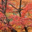 大智寺の紅葉(Ⅱ)