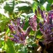 ホトトギスが咲いている…多摩川秋景色シリーズ