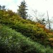 比較・緑岳樹林帯(9/14)