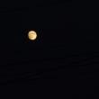まだ中秋の名月ではない