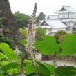金沢城公園と兼六園の風景と植物