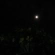 6月23日は慰霊の日!夜のアリアケカズラです!月と花!