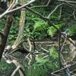 カワセミ♂と若の2羽の姿を~色んなアングルで・・・