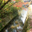 京の紅葉Ⅳ