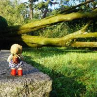 「京都御苑」にも、大きな爪痕を残した台風21号。秋の紅葉を楽しみに・・・