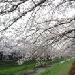 桜の季節:3人の恩師プラス?