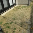 芝生の除草剤シバゲン・アージラン・MCCP三種混合を散布する