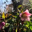 庭の花とかと、月の写真とか。あと昨日の補足も