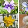 庭で咲いた花<2018.4.13>