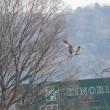 2月17日の鳥撮り散歩2・・・