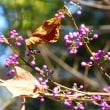 晩秋の東山植物園 ・・・ 名古屋市